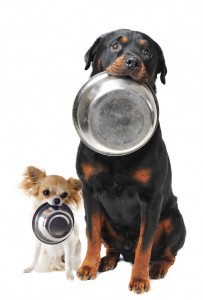 rottweiler chihuahua et bol de nourriture