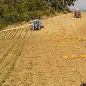 Agriculture-champ-recolte-Alexandre-Moreau-Flickr